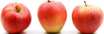 Køb dit næste æbletræ her